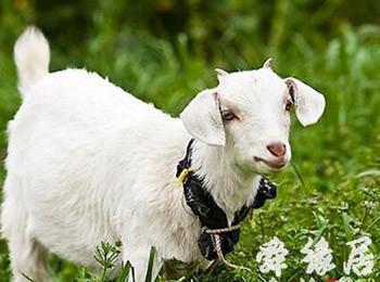山羊养殖场起名大全