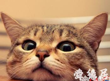 可爱小猫起名-给猫咪起名字-名字大全