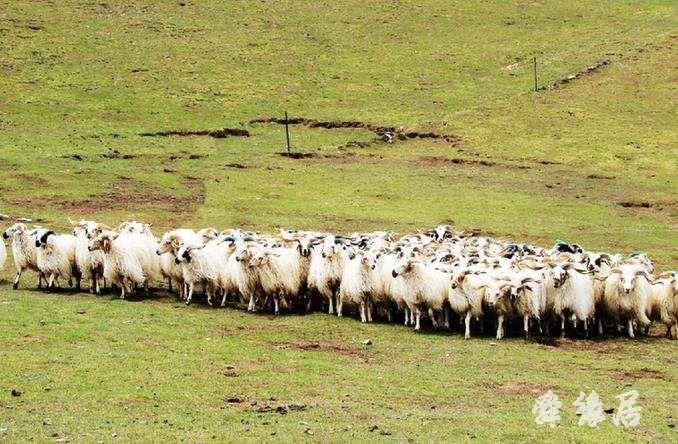 农牧业公司起名