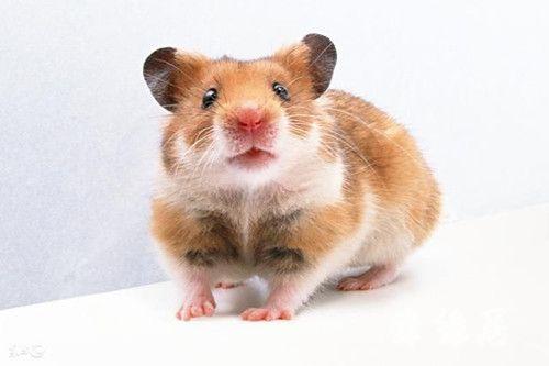 2020年鼠年宝宝取名大全